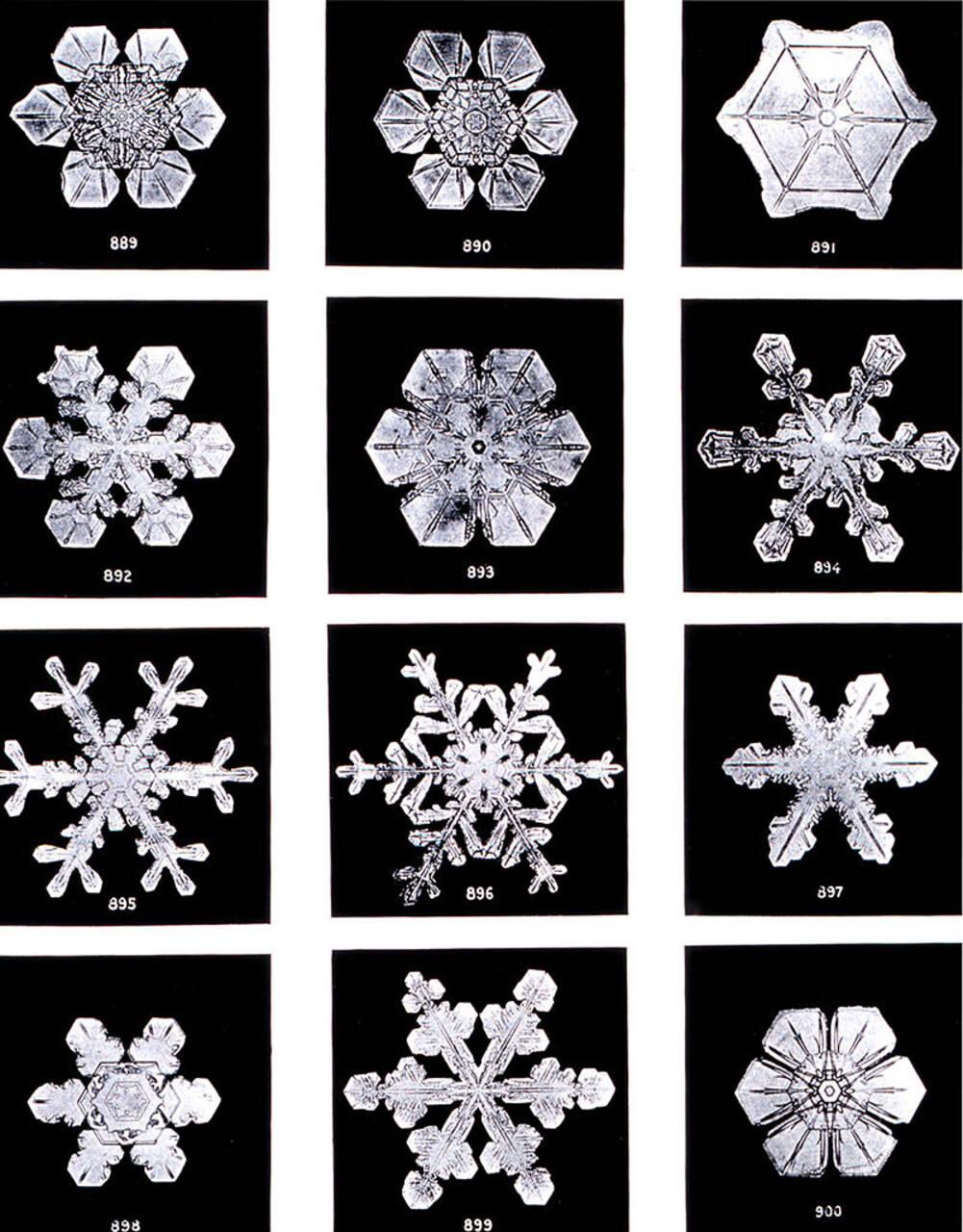 800px-SnowflakesWilsonBentley.jpg